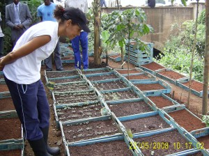 Seed bed area